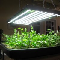 How to Choose the Best LED Grow Lights for Indoor Plants?